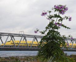 新幹線(ドクターイエロー)